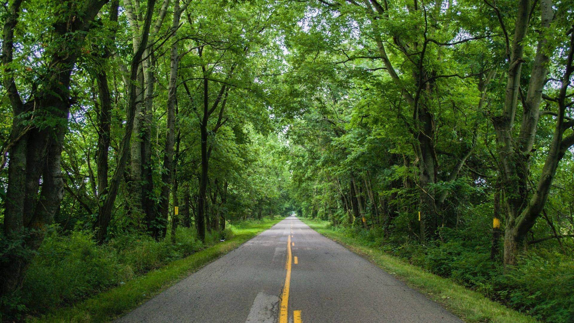 Une route dans les bois.